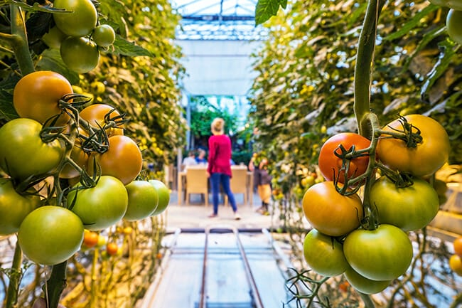 Visit the food farm in Iceland