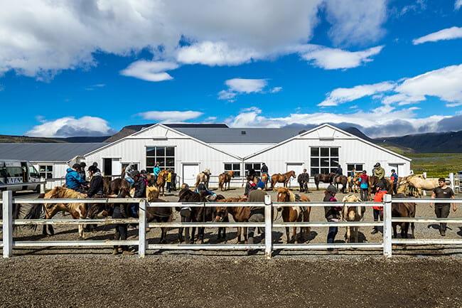 Horse-stable-Icelandic-horses-Iceland.jpg