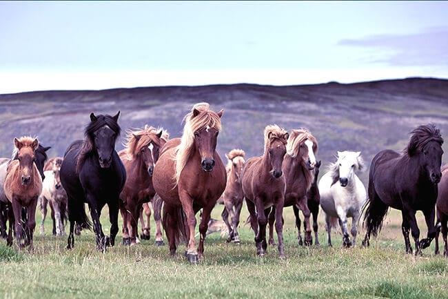 Horseback-riding-Icelandic-horses.jpg