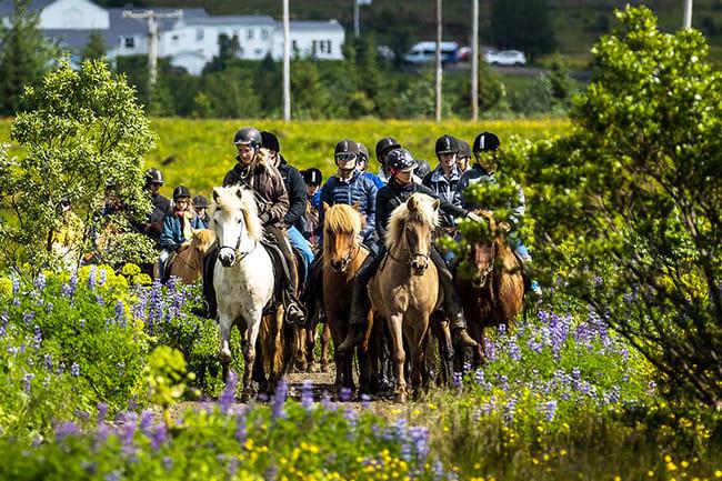 Horseback-riding-Laxnes-Iceland.jpg