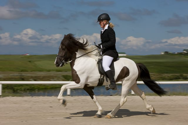 only-icelandic-horses-can-do-five-gaits