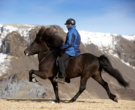 try-to-ride-the-icelandic-horse