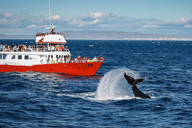 Whale-watching-boat-tour-Iceland.jpg